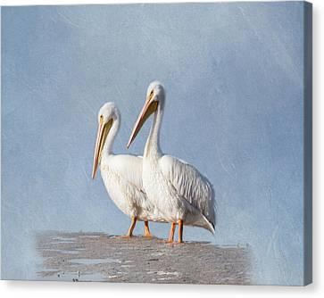 Canvas Print - Pelican Duo by Kim Hojnacki
