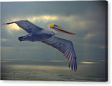 Pelican Flight Canvas Print