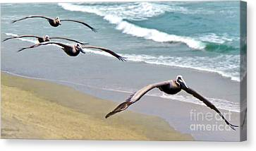 Pelican Fly-by Canvas Print