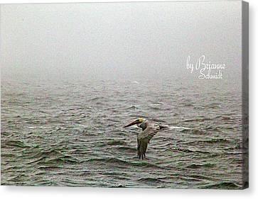 Pelican Fog Canvas Print by Brianne Schmidt