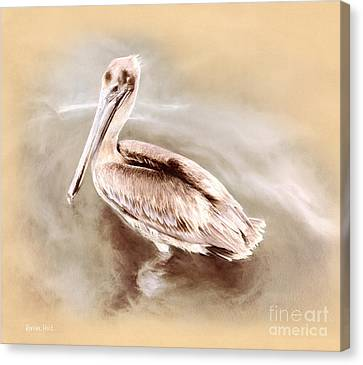 Attune Canvas Print - Pelican Gold by Korrine Holt