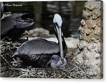 Pelican Hug Canvas Print by Barbara Bowen