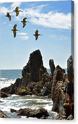 Sea Birds Canvas Print - Pelican Inspiration by Gwyn Newcombe