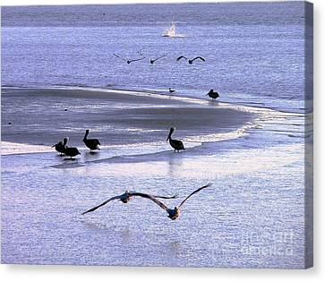 Pelican Island Canvas Print by Al Powell Photography USA