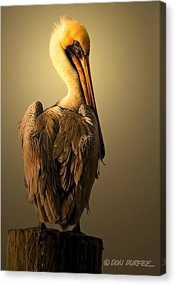 Canvas Print featuring the photograph Pelican On Piling by Don Durfee
