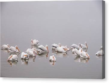 Canvas Print featuring the photograph Pelicans On The Lake by Carolyn Dalessandro