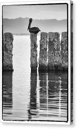 Pelican Perch II Canvas Print by Linda Dunn