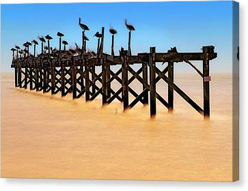 Canvas Print featuring the photograph Pelican Pier Near Pass Christian - Mississippi by Jason Politte