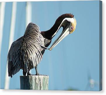 Canvas Print featuring the photograph Pelican Preen by Lynda Dawson-Youngclaus