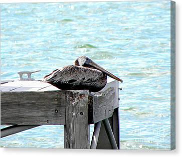 Pelican Resting Canvas Print by Terri Mills
