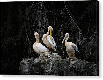 Pelican Rock Canvas Print