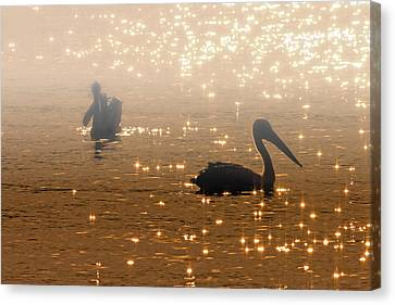 Fog Mist Canvas Print - Pelican Sunrise by Mike  Dawson