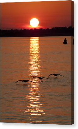 Bouys Canvas Print - Pelican Sunset by Dustin K Ryan
