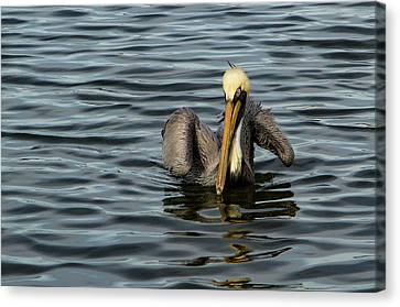 Canvas Print featuring the photograph Pelican Wing In A  Twist by Jean Noren
