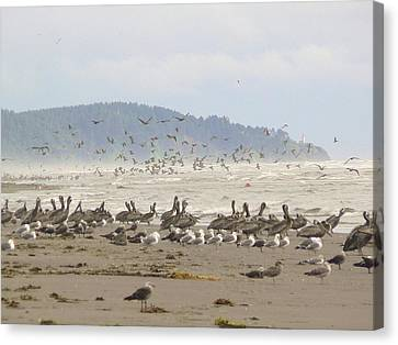 Canvas Print featuring the photograph Pelicans And Gulls by Pamela Patch