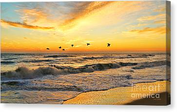 Pelicans At Sunrise  Signed 4651b 2  Canvas Print by Jack Schultz