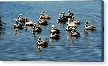 Pelicans Blue Canvas Print