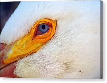 Pelican's Eye Canvas Print by Marty Koch