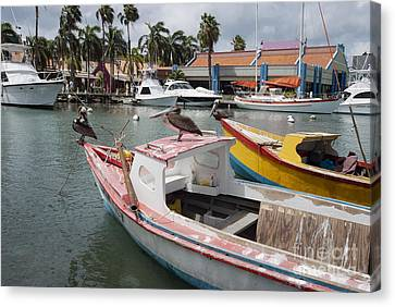 Pelicans On A Small Fishing Boat At Oranjestad Harbor, Aruba, Caribbean Islands Canvas Print