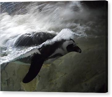 Penguin Canvas Print by Maggy Marsh