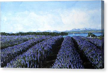Penn Cove Lavender Canvas Print