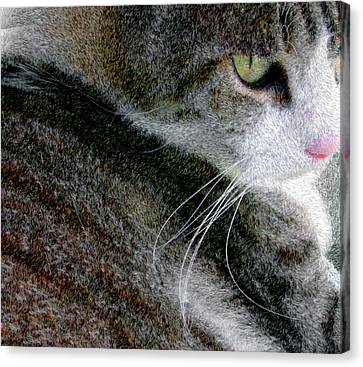 Pensive Canvas Print by Chuck Mountain