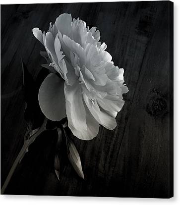 Canvas Print featuring the photograph Peonie by Sharon Jones