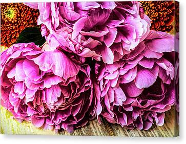 Peonies And Daisies  Canvas Print by Garry Gay
