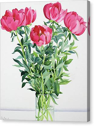 Peonies  Canvas Print by Christopher Ryland