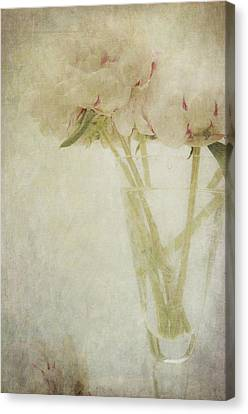 Peonies Canvas Print by Marion Galt