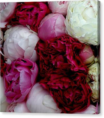 Peony Bouquet Canvas Print by Lainie Wrightson