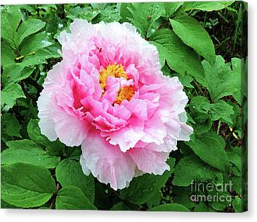 Peony In Pink - Watercolor Canvas Print