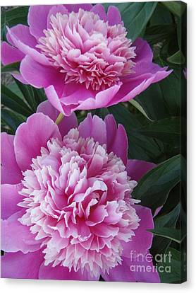 Canvas Print featuring the photograph Peony by Kristine Nora