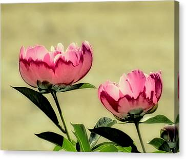 Peony Pair - Enhanced Canvas Print