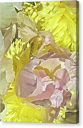 Peony Perfect Canvas Print by Gwyn Newcombe