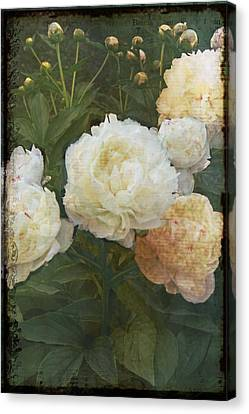 Peony Canvas Print by Rosemary Aubut
