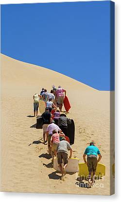 People Pushing Sandboards Up The Dune Canvas Print by Patricia Hofmeester
