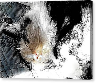 Pepper Sunface Canvas Print