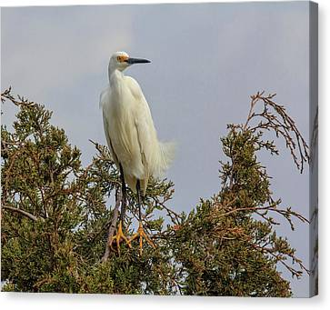 Canvas Print featuring the photograph Perch by Robert Pilkington