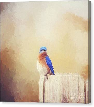 Perched And Pretty - Digital Painting Canvas Print