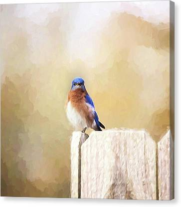 Perched And Ready Canvas Print