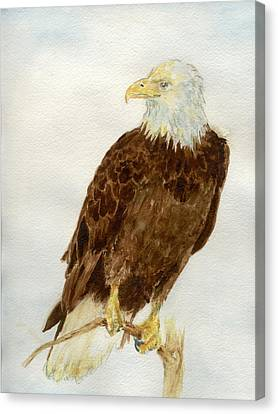 Perched Eagle Canvas Print by Andrew Gillette