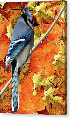 Perched In Autumn  Canvas Print by Debra     Vatalaro