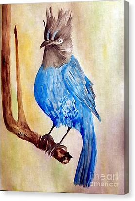 Perched Stellar Jay Canvas Print by Maria Urso