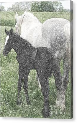 Percheron Colt And Mare In Pasture Digital Art Canvas Print