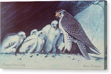 Peregrine Falcon Family Canvas Print by Marte Thompson