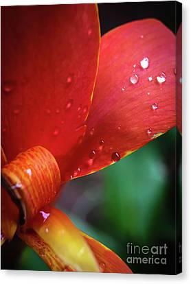 Perennial Delight Canvas Print