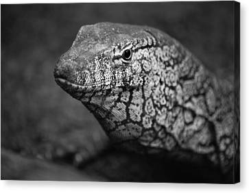 Perentie Monitor Lizard - Black And White Canvas Print