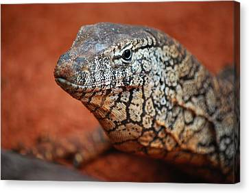 Perentie Monitor Lizard Color Canvas Print