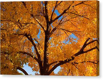 Perfect Autumn Day With Blue Skies Canvas Print by James BO  Insogna